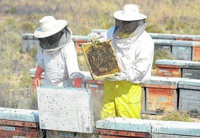 Medicina del profeta Muhammad – La miel